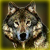 stormkeeper: Picture of a wolf (Default)