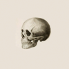 cosmonogy: (skull - so happy i could die)
