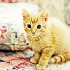 abeiramar: (Cat meow)