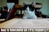 skinners_box: (TPS report)