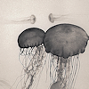 haleskarth: Grey jellyfish. (Jellyfish.)