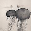 haleskarth: Grey jellyfish. (Jellyfish.)