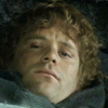 tinidril: photo of Samwise trying to rest (tired, bored, sleepy)
