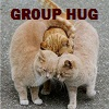 mific: (Group hug cats)