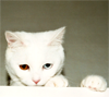 meowtstanding: (CAT with bowie eyes)