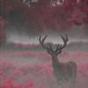 valjeanoverboard: (deer)