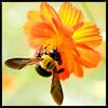 squid_ink: (bee)