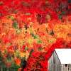 chanter_greenie: an older house and surrounding autumn scenery (Wisconsin autumn: smells like fall)