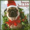 yahtzee: (Christmas pug)
