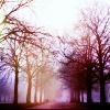 beilul: (foggy forest)