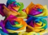callibr8: (Rainbow-of-Roses)