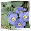 samalander: (Flowerses)
