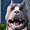 temperedblade: (Happy bark)