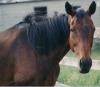 horses: (Default)
