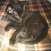 sobriquett: A stripey seven-week-old kitten. (Default)