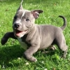 lionheartedman: (puppy)