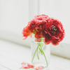 anacrusis: red flowers in a vase on a windowsill (Default)