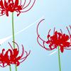 imlithing: dragonflowers, red on blue bg (dragonflowers)