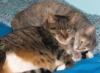 benevolentspectre: (Cats)