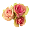 rea0: Simplistic picture of yellow and pink roses. (default) (Default)