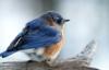 m_findlow: (Bluebird)