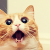 skaldadottir: Excited Cat. (this is so exciting)