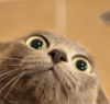 skaldadottir: Shocked Cat (what was seen cannot be unseen)