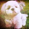 neliq: (Dogs~)