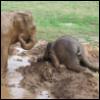 sparrow_lately: (elephant)