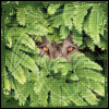 yanagi_wa: green leaves with cat eyes (jungle, eyes)