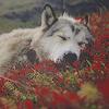 sixbeforelunch: dog asleep on the ground, no text (sleeping dog)