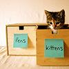 possiblyevil: kittens in a gd kitten drawer (insert kitten here)