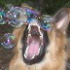 gogempd: (bubbledeath)