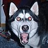 shewolf_org: (ояебу)