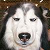 shewolf_org: (бибигон)