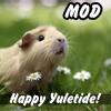 morbane: uletide mod image of guinea pig among daisies (Yuletide)