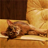 catterspace: (🐈 Relaxed.)