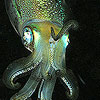 neuroticsquid: (squid)