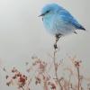 cdayzee: (bluebird)