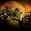 james: trees with large moon at night (autumn moon and trees)
