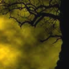 james: a tree against a yellow cloud background (ianto to do list)