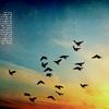 turmeric: (birds)