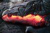 heron61: (Angry Dragon)