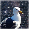 seagull2eagle: (sv - Brilliant)