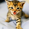 cornhobble: (.Kitten - Cute <3)