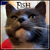 naamah_darling: A gray cat with a white chin squinting as though she smells food. (Fish)