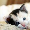 celestialdescent: Image: A cute kitten. (cuteness)