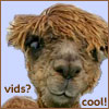 cofax7: Alpaca thinks vids are cool (Alpaca - Vids)
