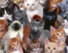 aruwolf: a bunch of cats (pic#10604187)