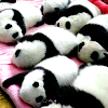 wailmer: Pandas icon (Hetalia | China | Shades)